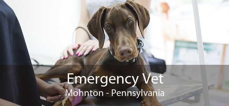 Emergency Vet Mohnton - Pennsylvania