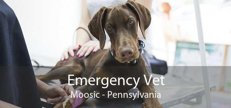 Emergency Vet Moosic - Pennsylvania
