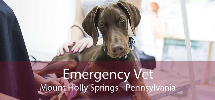 Emergency Vet Mount Holly Springs - Pennsylvania