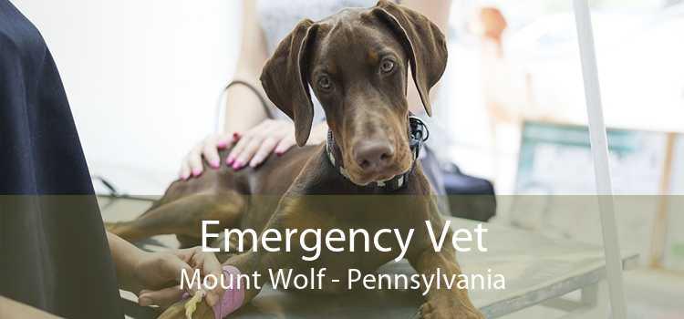 Emergency Vet Mount Wolf - Pennsylvania