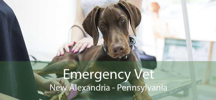 Emergency Vet New Alexandria - Pennsylvania