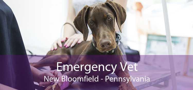 Emergency Vet New Bloomfield - Pennsylvania