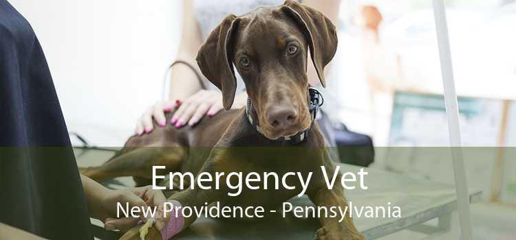 Emergency Vet New Providence - Pennsylvania