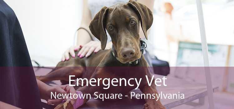 Emergency Vet Newtown Square - Pennsylvania