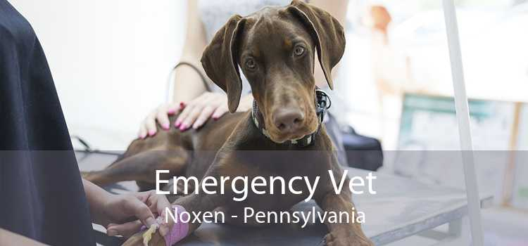 Emergency Vet Noxen - Pennsylvania
