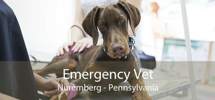 Emergency Vet Nuremberg - Pennsylvania