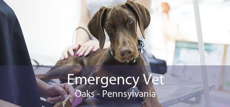 Emergency Vet Oaks - Pennsylvania
