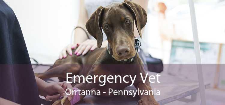 Emergency Vet Orrtanna - Pennsylvania