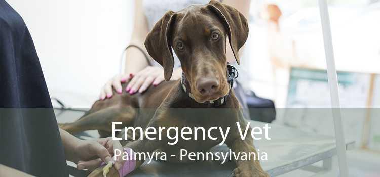 Emergency Vet Palmyra - Pennsylvania