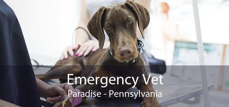 Emergency Vet Paradise - Pennsylvania