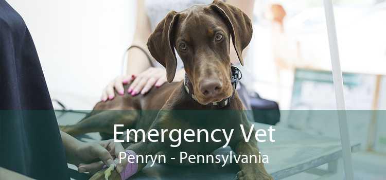 Emergency Vet Penryn - Pennsylvania