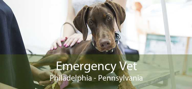 Emergency Vet Philadelphia - Pennsylvania
