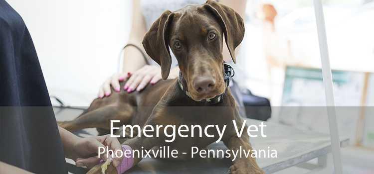 Emergency Vet Phoenixville - Pennsylvania