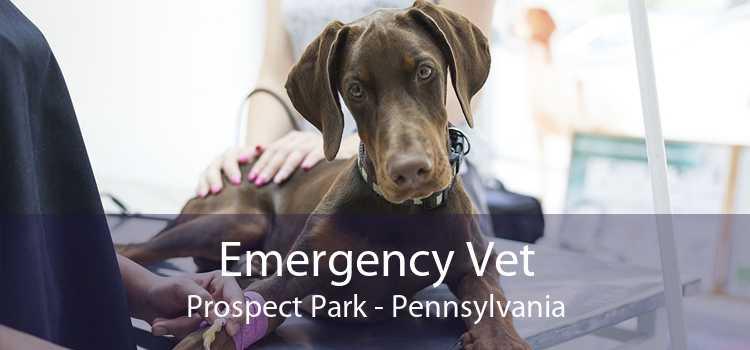 Emergency Vet Prospect Park - Pennsylvania