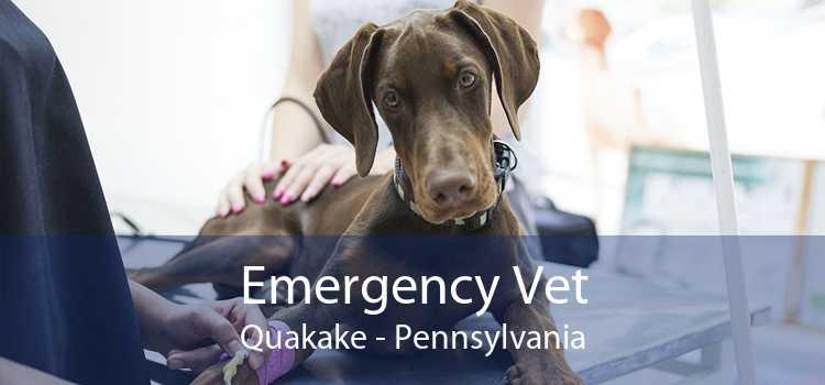 Emergency Vet Quakake - Pennsylvania