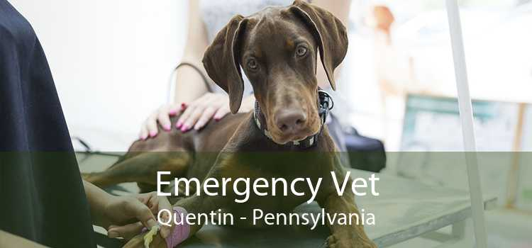 Emergency Vet Quentin - Pennsylvania
