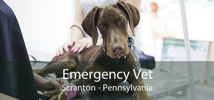 Emergency Vet Scranton - Pennsylvania