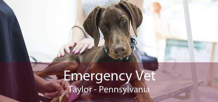 Emergency Vet Taylor - Pennsylvania