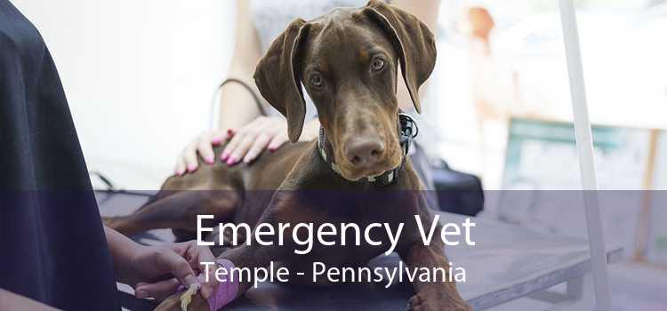 Emergency Vet Temple - Pennsylvania