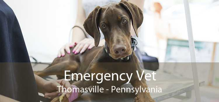 Emergency Vet Thomasville - Pennsylvania