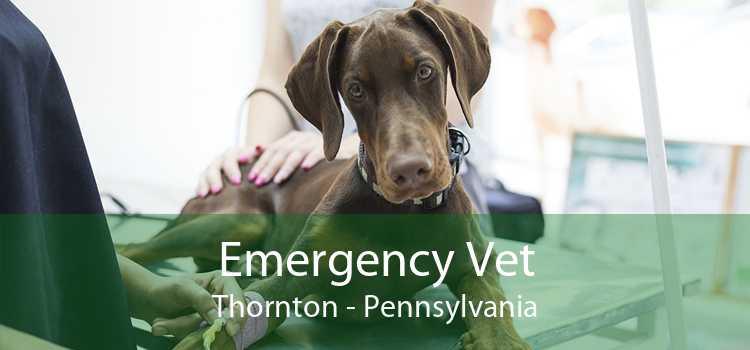 Emergency Vet Thornton - Pennsylvania