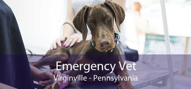 Emergency Vet Virginville - Pennsylvania