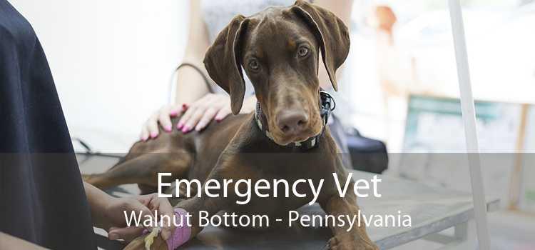 Emergency Vet Walnut Bottom - Pennsylvania