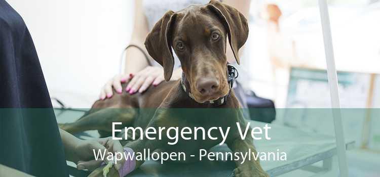 Emergency Vet Wapwallopen - Pennsylvania
