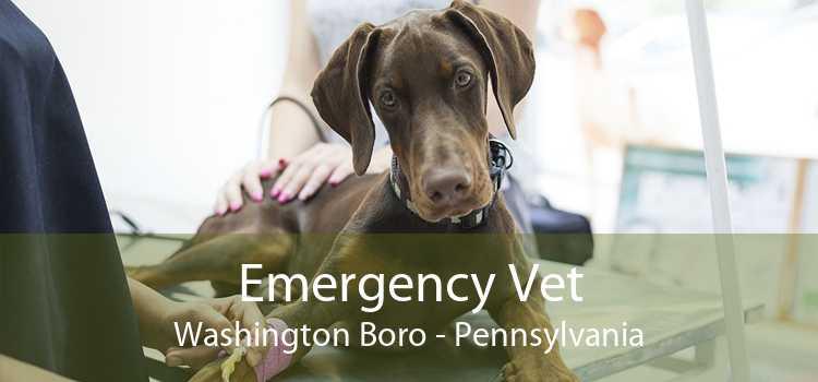 Emergency Vet Washington Boro - Pennsylvania