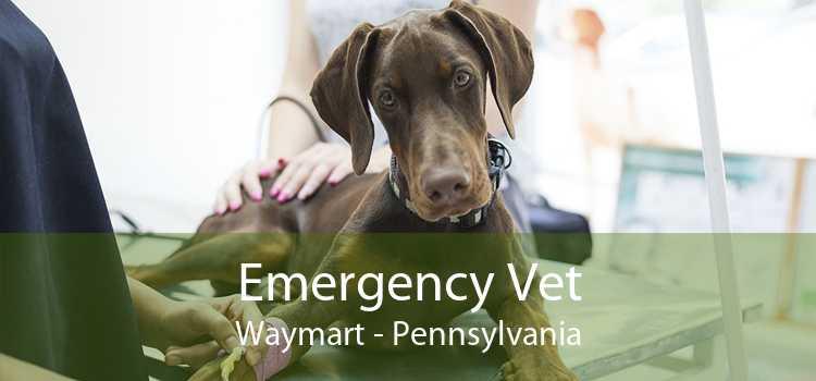 Emergency Vet Waymart - Pennsylvania