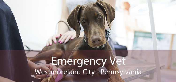Emergency Vet Westmoreland City - Pennsylvania