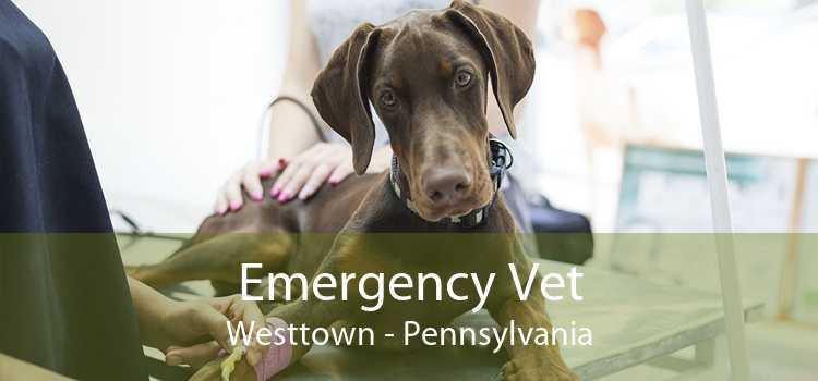 Emergency Vet Westtown - Pennsylvania