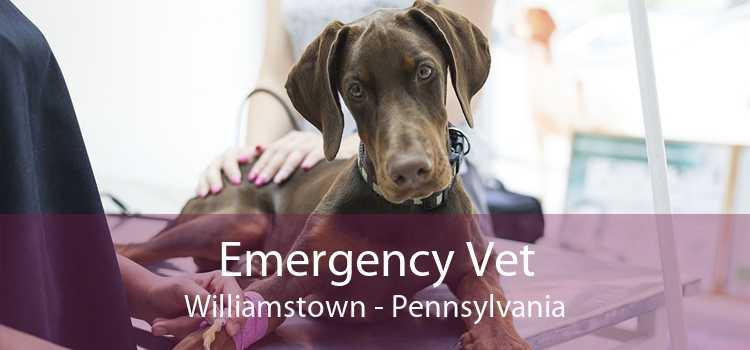 Emergency Vet Williamstown - Pennsylvania
