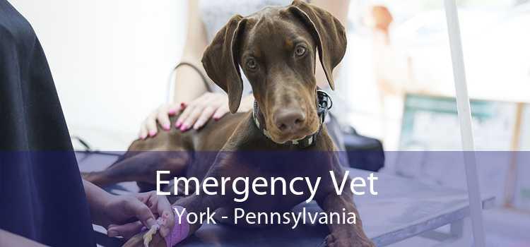 Emergency Vet York - Pennsylvania