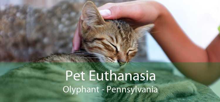 Pet Euthanasia Olyphant - Pennsylvania