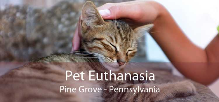 Pet Euthanasia Pine Grove - Pennsylvania