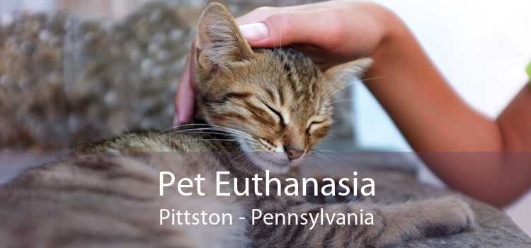 Pet Euthanasia Pittston - Pennsylvania