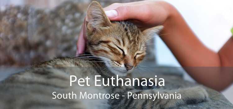 Pet Euthanasia South Montrose - Pennsylvania