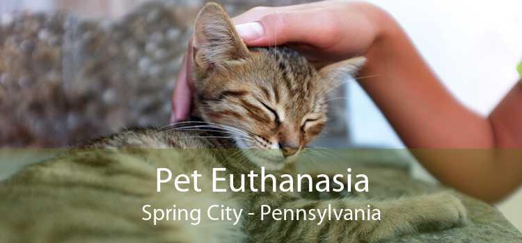Pet Euthanasia Spring City - Pennsylvania