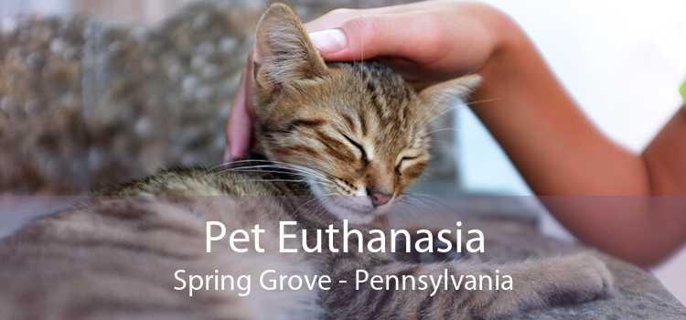 Pet Euthanasia Spring Grove - Pennsylvania