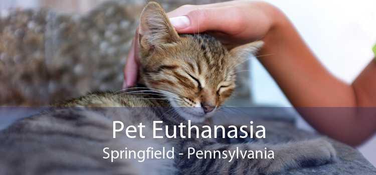 Pet Euthanasia Springfield - Pennsylvania