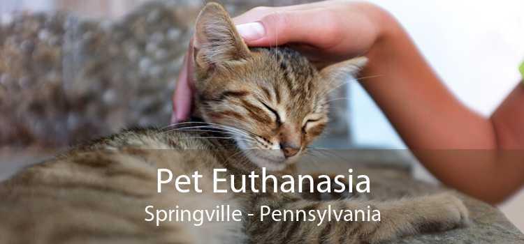 Pet Euthanasia Springville - Pennsylvania