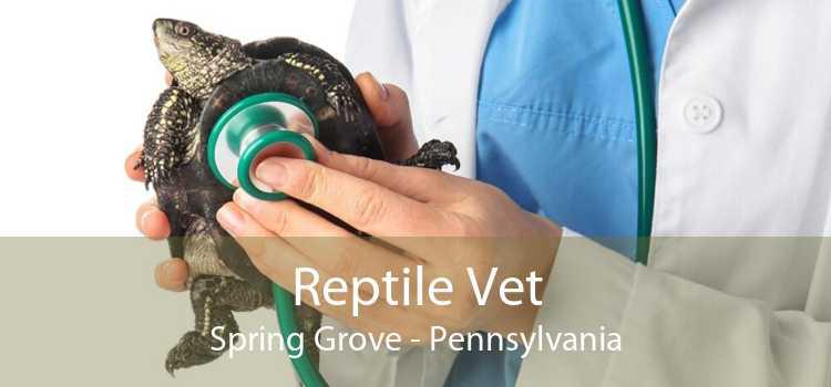 Reptile Vet Spring Grove - Pennsylvania