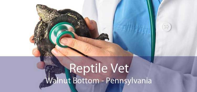 Reptile Vet Walnut Bottom - Pennsylvania