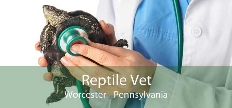 Reptile Vet Worcester - Pennsylvania
