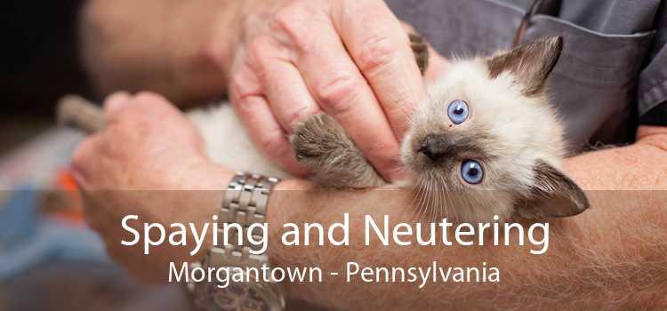 Spaying and Neutering Morgantown - Pennsylvania