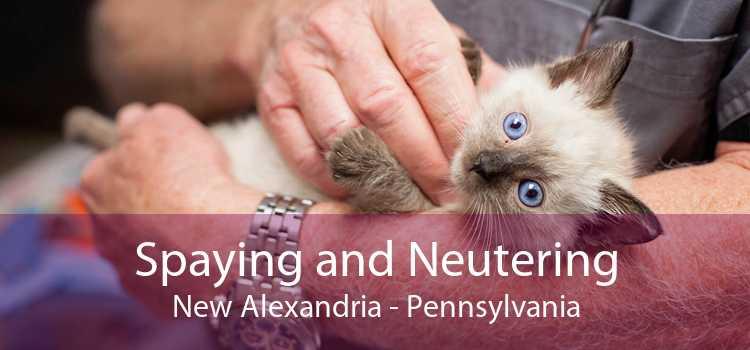 Spaying and Neutering New Alexandria - Pennsylvania