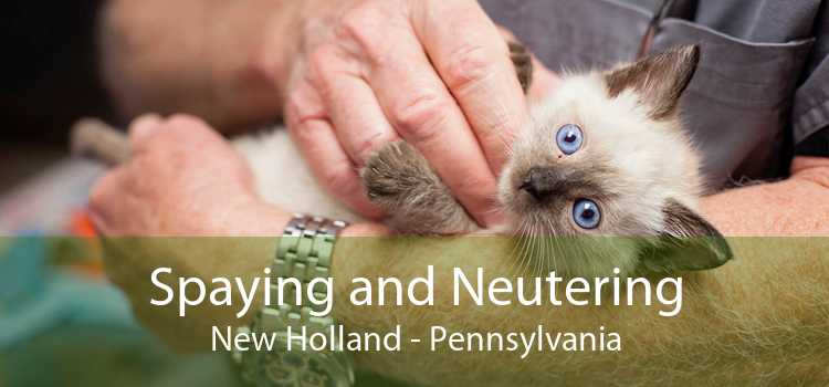 Spaying and Neutering New Holland - Pennsylvania
