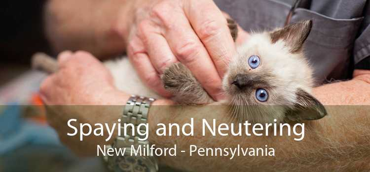 Spaying and Neutering New Milford - Pennsylvania