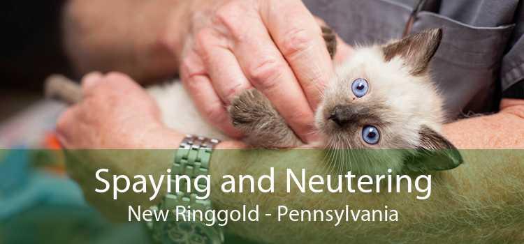 Spaying and Neutering New Ringgold - Pennsylvania